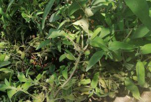 Offro piante officinali e aromatiche