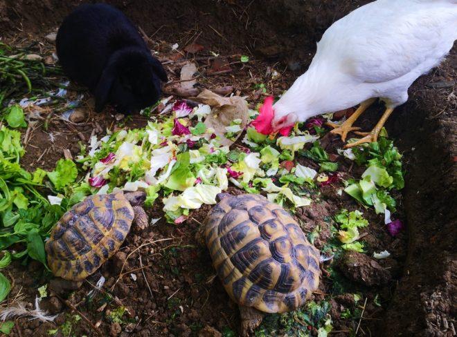 L'Oasi di Camilla, dove gli animali possono trovare nuova vita