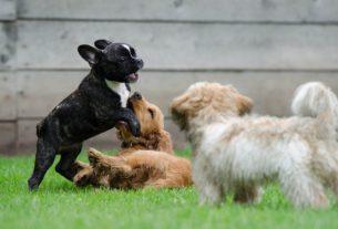 Impariamo dagli animali a stare bene con noi stessi e con gli altri