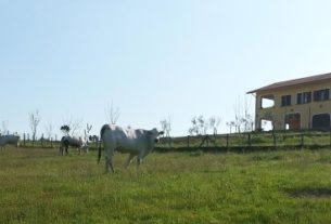 Azienda Agricola Forestale Porcineta A.R.L.