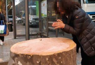 Una legge per consentire ai cittadini di fermare la strage di alberi