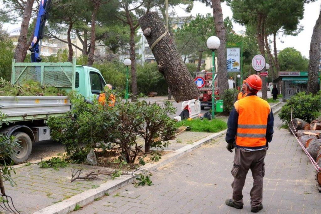 strage di alberi pescara
