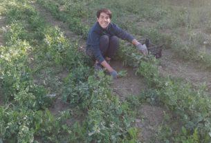 Cerco lavoro in azienda agricola/agricoltura sociale