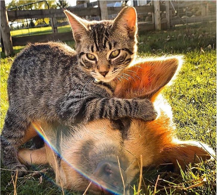 Cerco rustico per realizzare un rifugio per gatti, animali da cortile e centro energetico