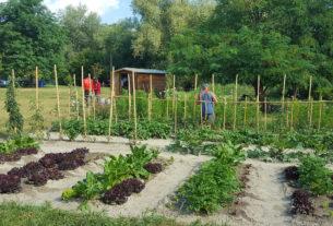 Nasce il Badante agricolo di comunità che aiuta le persone anziane nella cura dell'orto