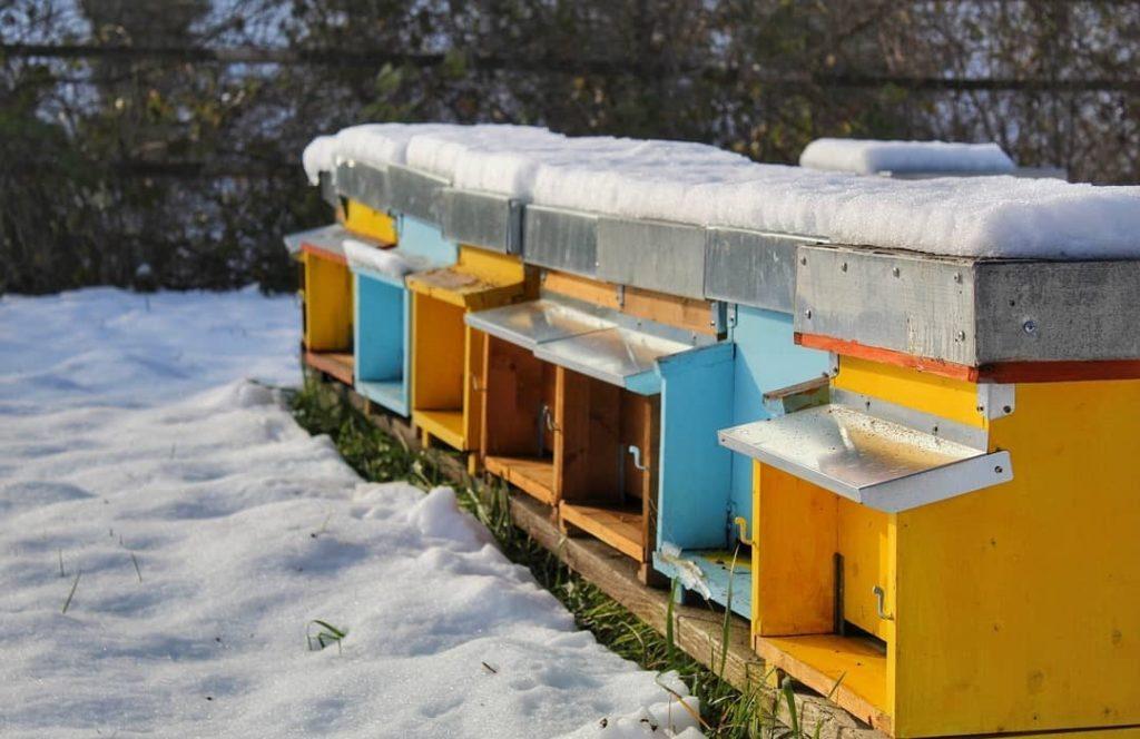 apicoltore 2