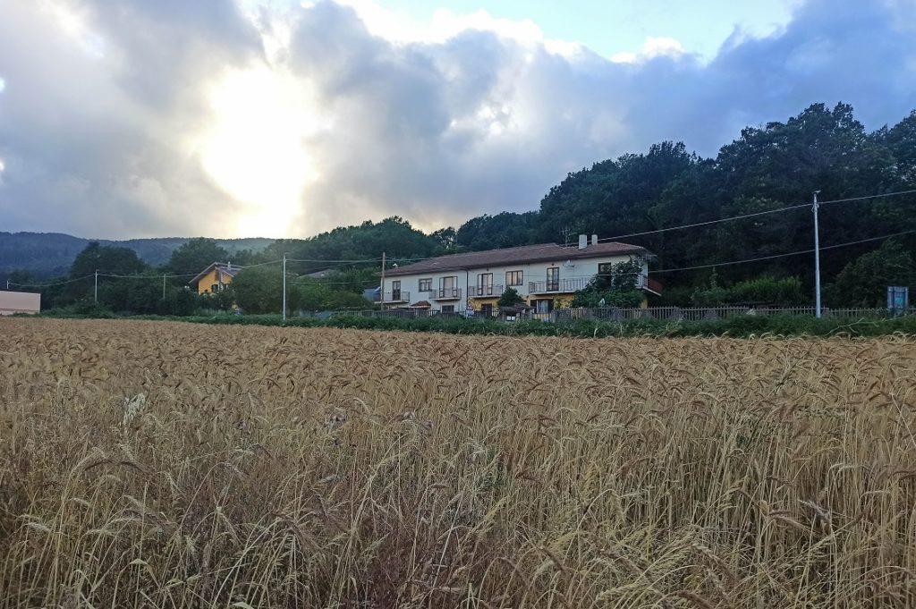 le terre di perre campo di grano