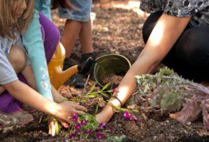 A Sanremo nonni e bimbi si incontrano al parco e curano l'orto collettivo della città