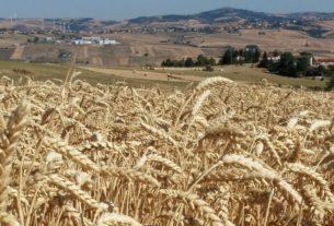 Nell'antico borgo di Oscata si impara a fare ceste e cera d'api