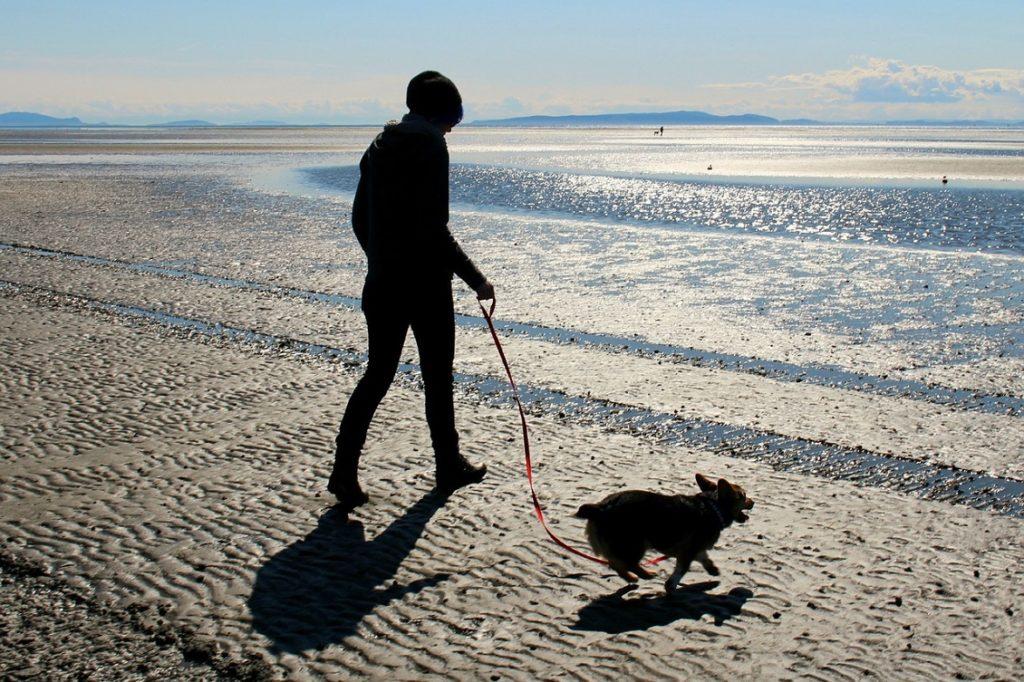 viaggiare col cane 2
