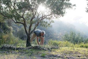 Permacultura, rigenerazione e una food forest: la nuova vita di Chris e Mario in Calabria