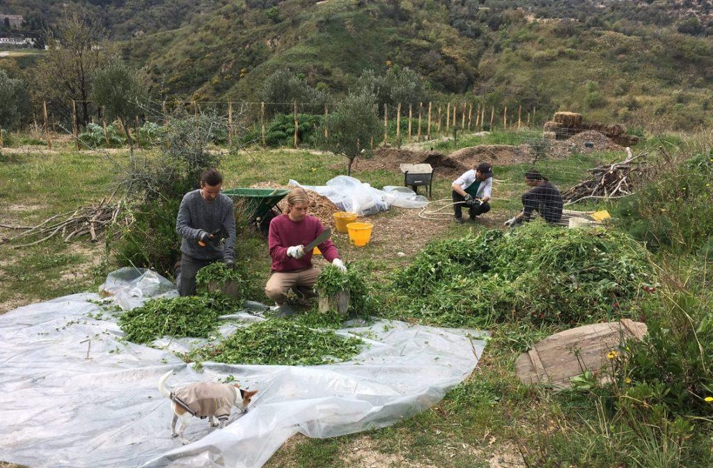 Badolato Permacultura Compost