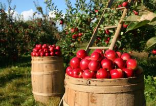 Cascina Mellano: un'azienda agricola che guarda all'ambiente