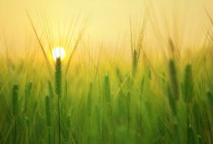 Il Green Deal parte dalla Sicilia: approvata la legge sull'Agroecologia