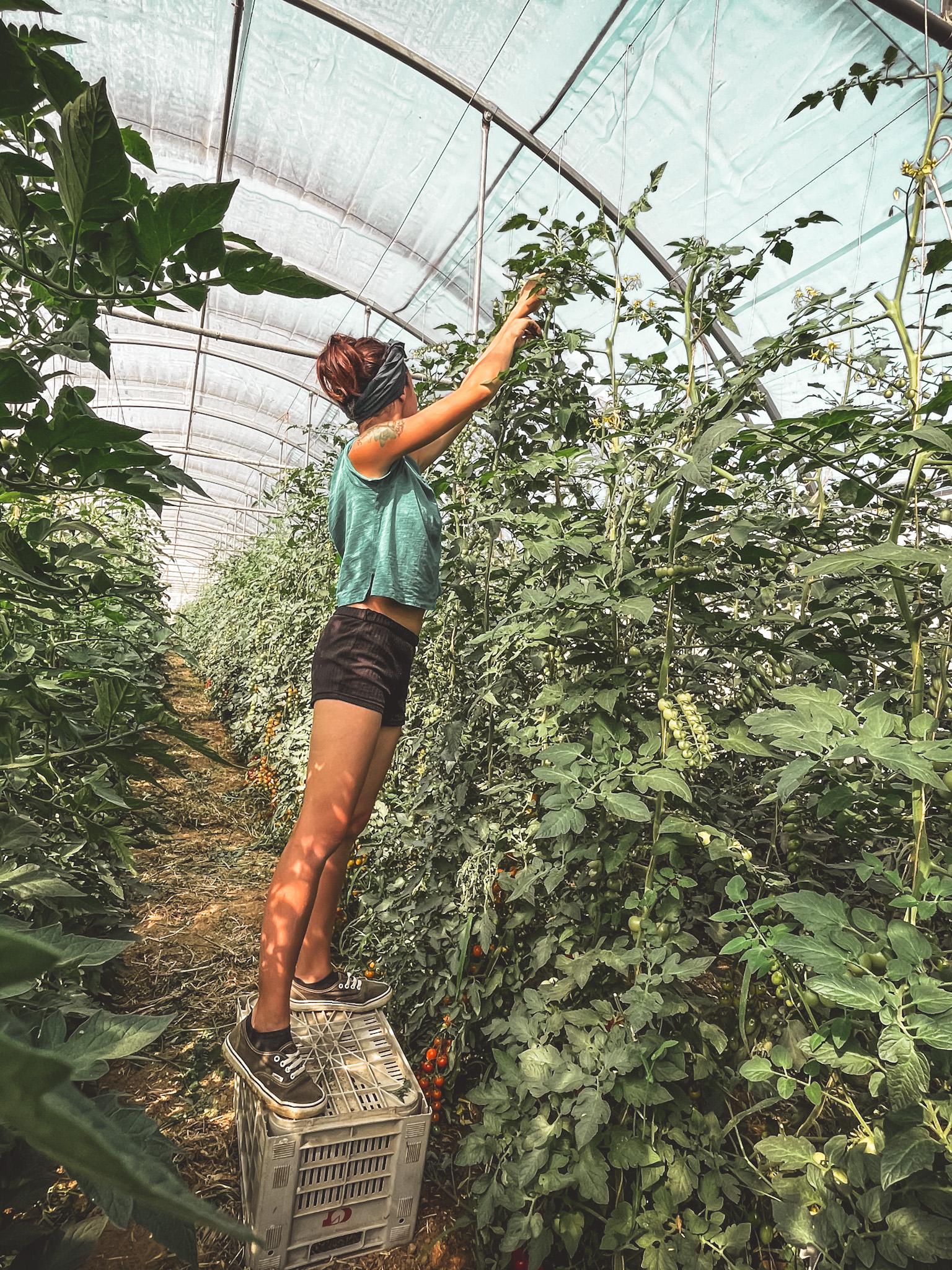Cerco azienda agricola/agrituristica