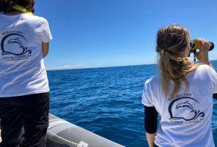 Delfini del Ponente, giovani in prima linea per tutelare la biodiversità marina