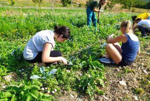 Volontariato ambientale: storia di un gruppo di giovani che crede in un mondo migliore