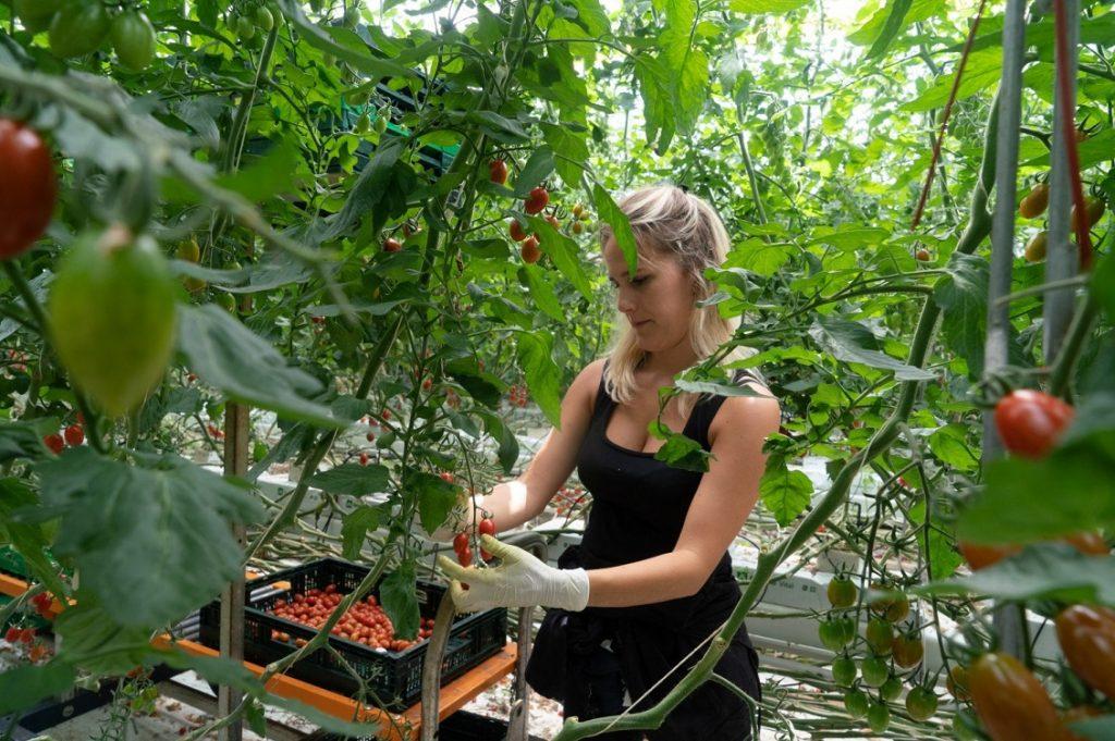 agricoltura idroponica 1