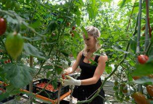 Agricoltura idroponica: è questo il metodo di coltivazione del futuro?