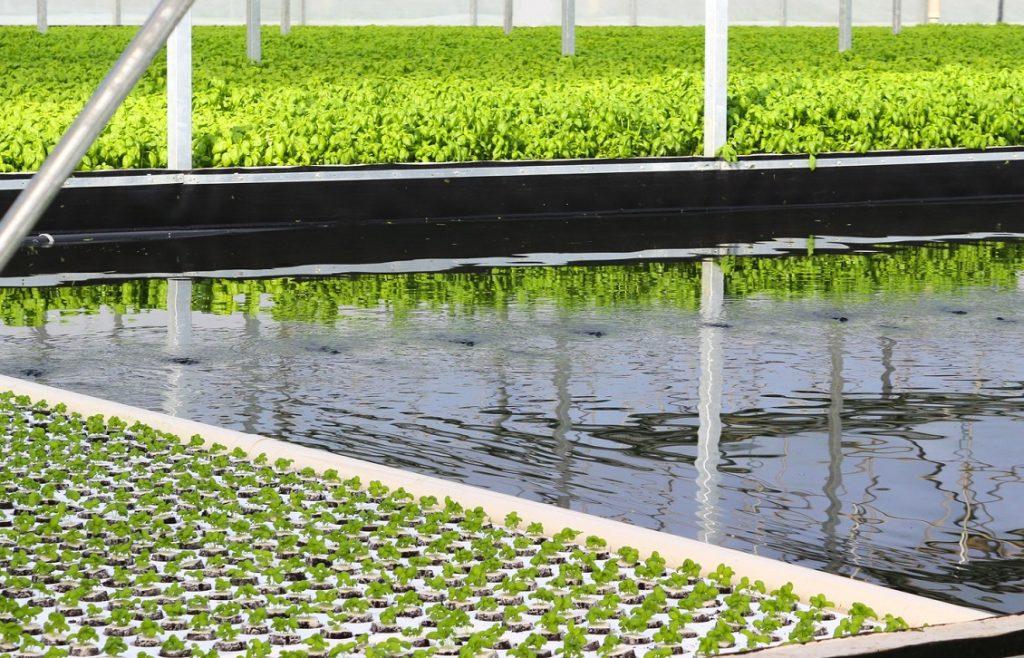 agricoltura idroponica 2