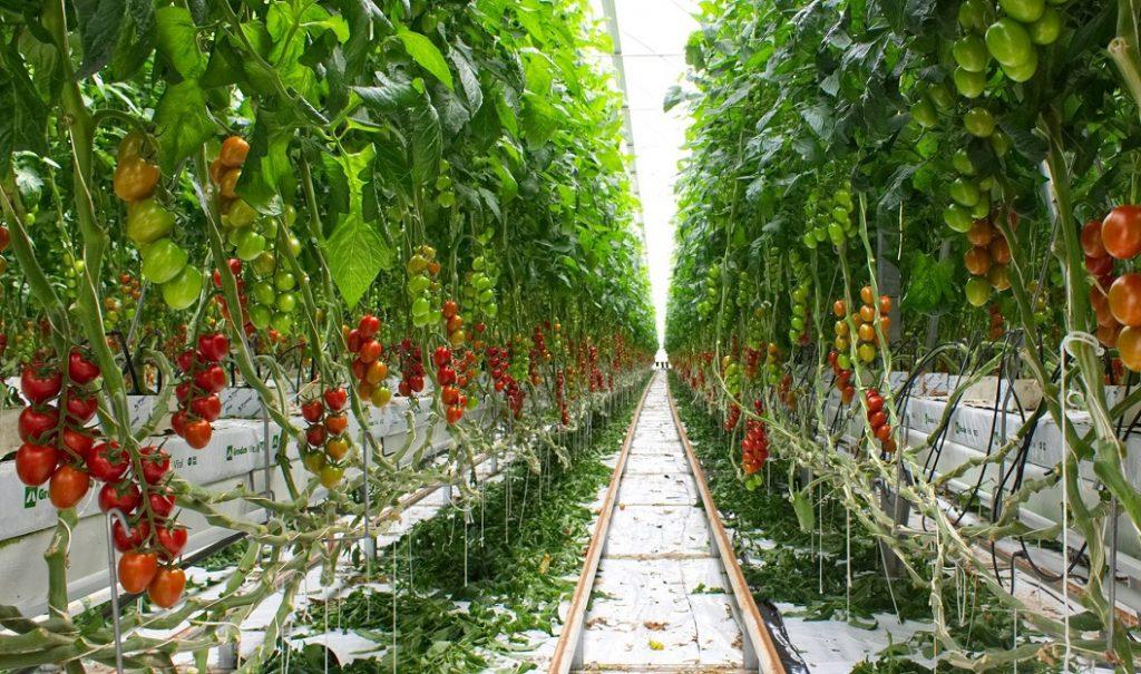 agricoltura idroponica 3