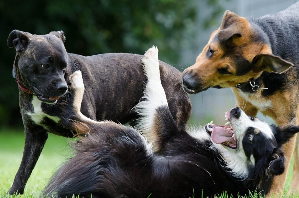asili per cani
