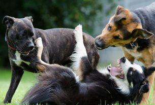 Asili per cani: ecco come scegliere quello che piace a lui, non a noi