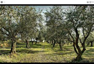 Offro azienda agricola in Basilicata