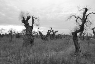 Ulivi malati e biodiversità in pericolo: la Puglia non si avvelena!