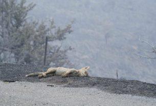Stagione di caccia: nessuno stop nonostante gli incendi abbiano decimato gli animali