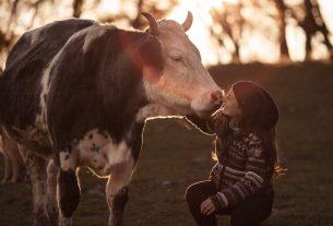 Cerco stallo temporaneo a pagamento per 16 mucche e cavalli