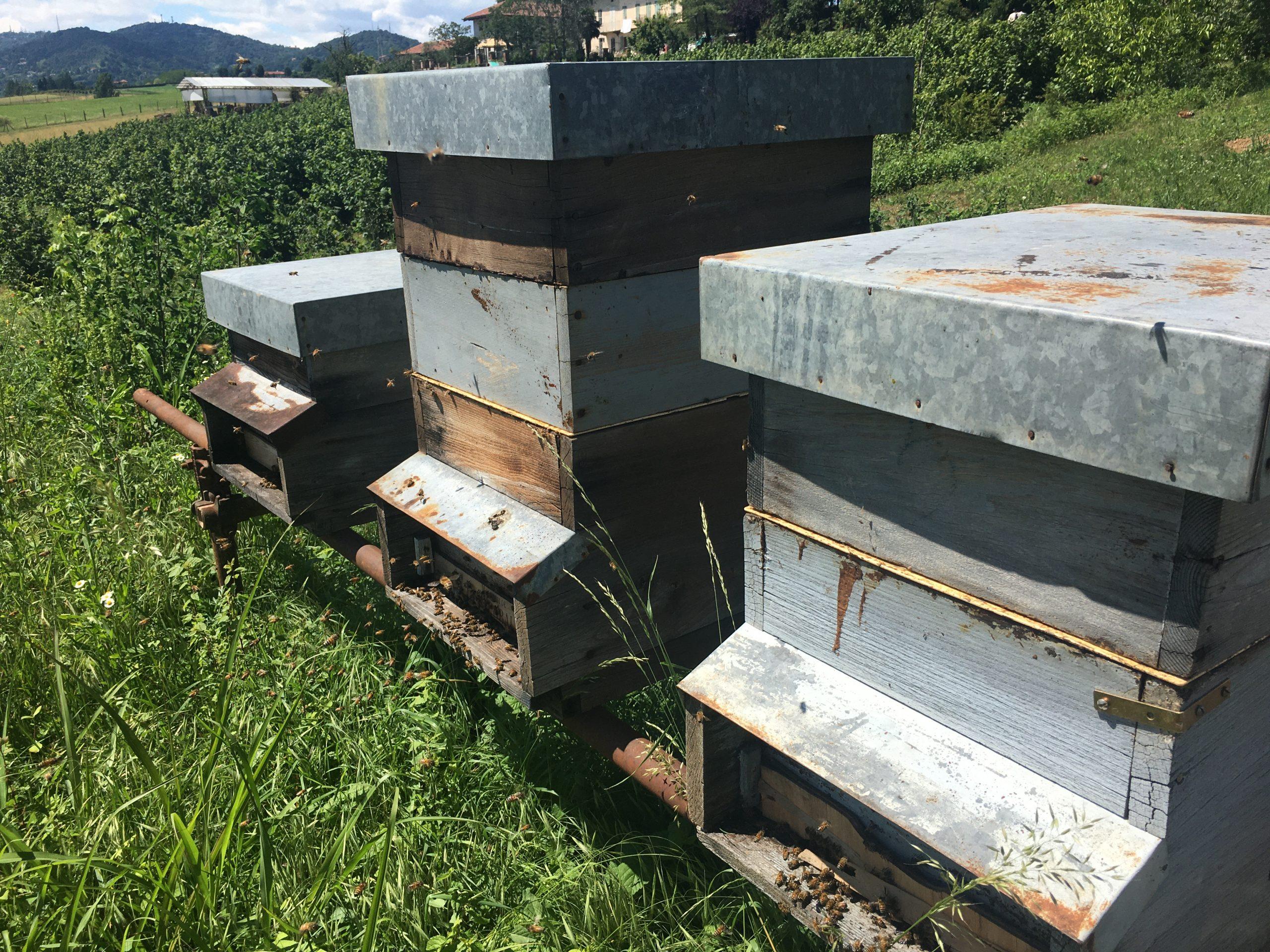 Cerco location per ospitare tre famiglie di api nella prima cintura di Torino