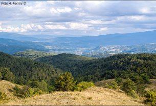 Cerco posto nelle colline romagnole/Casentino
