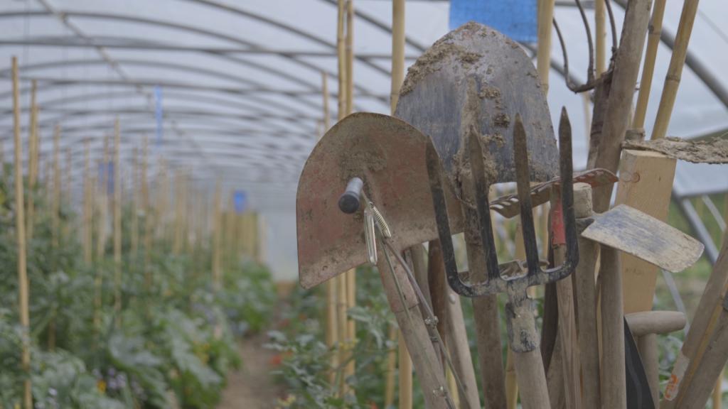 7 ca mariuccia agricoltura etica porte torino 1487328429