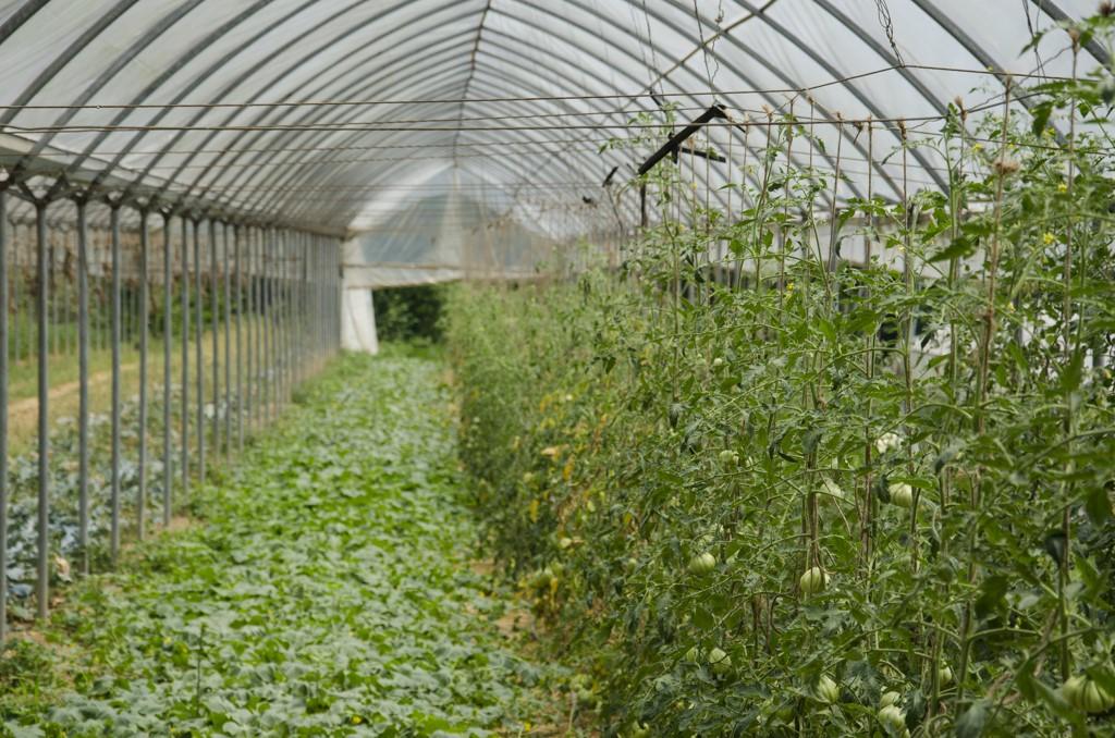 9 metodo manenti modo innovativo fare agricoltura 1487348356