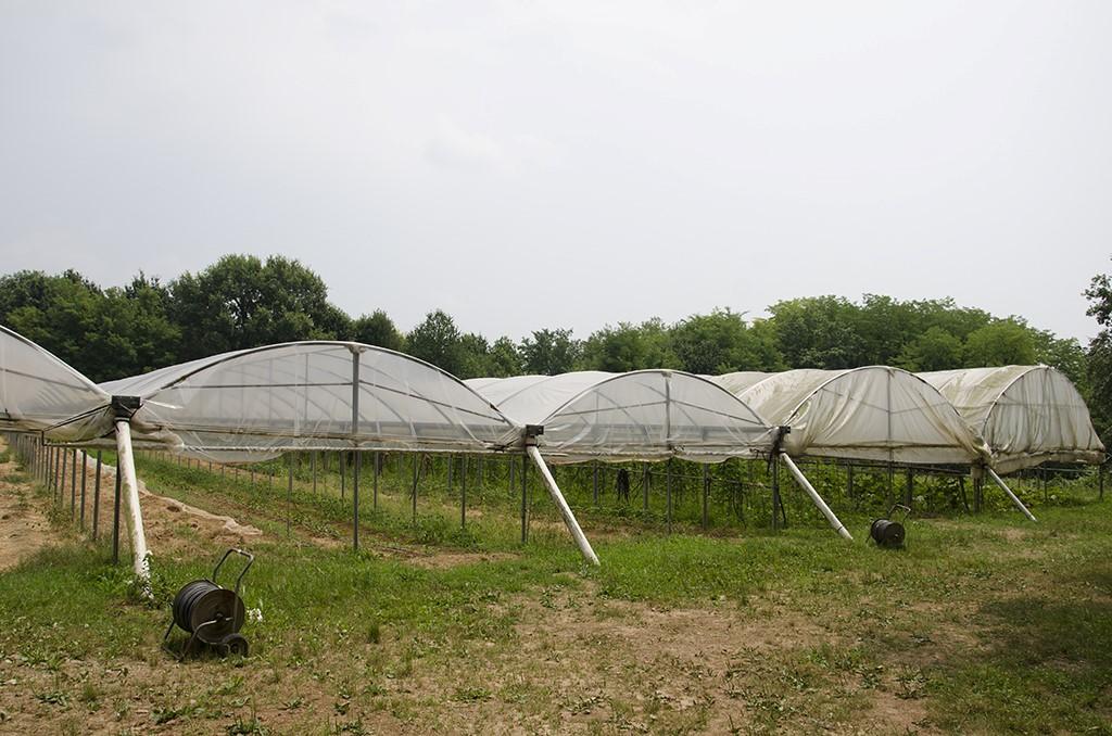 9 metodo manenti modo innovativo fare agricoltura 1487348371