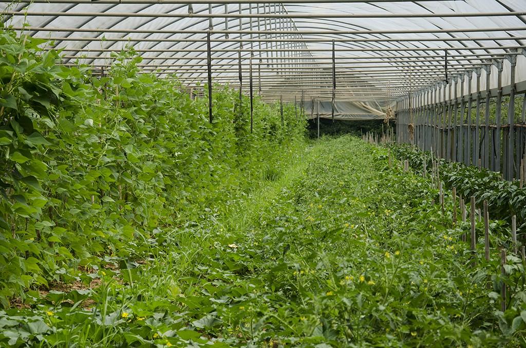 9 metodo manenti modo innovativo fare agricoltura 1487348403