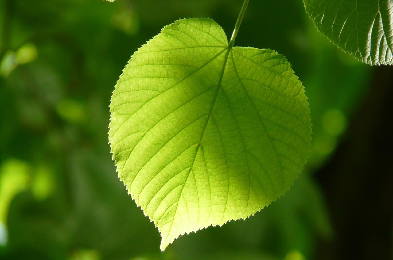 alba coccinelle diventano portafortuna naturale difesa verde pubblico 1562062400
