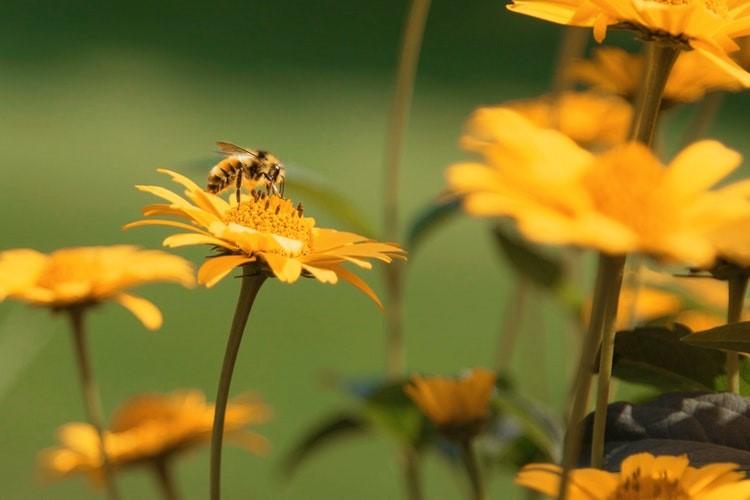 api sentinelle ambientali monitorare qualita aria 1551268063