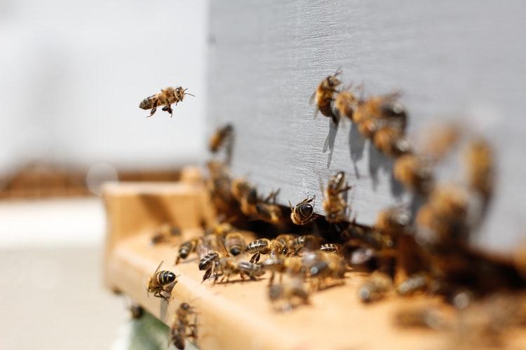 api sentinelle ambientali monitorare qualita aria 1551268128