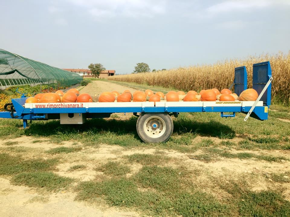azienda agricola emanuele bono prodotti naturali cuore terra 1562833996