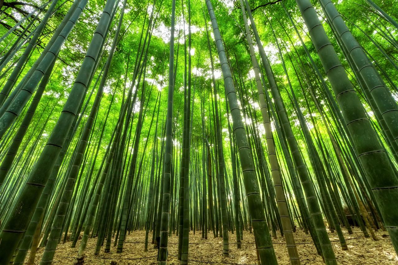 bambu pianta futuro nuova economia 1568273975