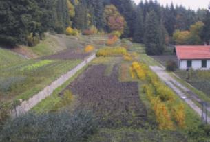 Un bando per diffondere le antiche cultivar