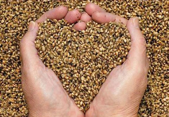 casa diffusa biodiversita agraria ricchezza salvaguardare agricoltura tradizionale 1556269166