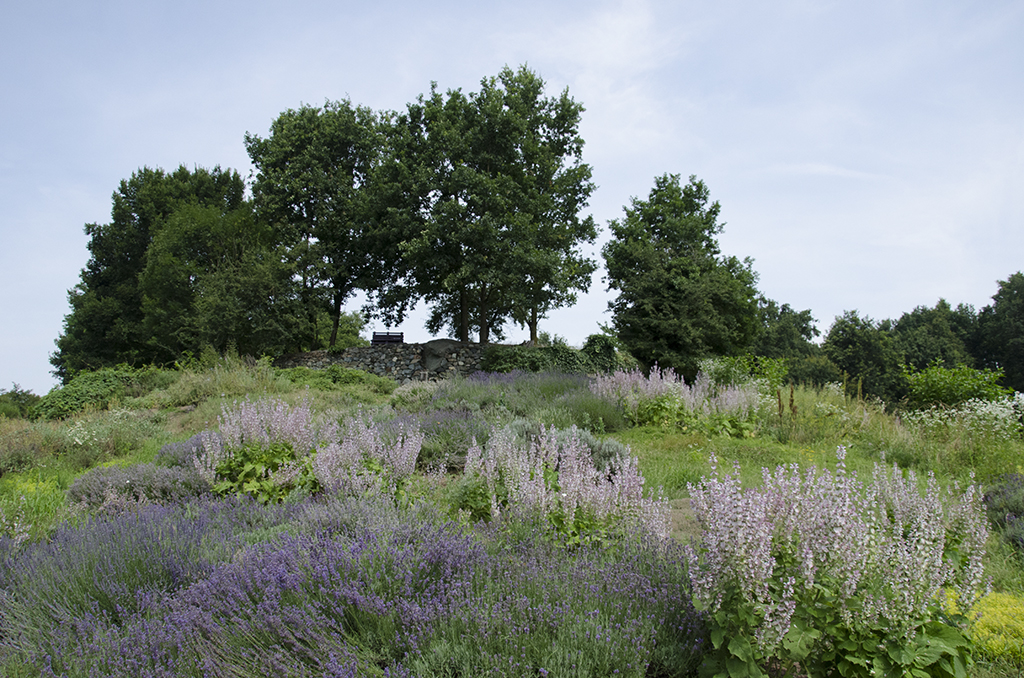 cascina molino torrine continua ricerca erbe aromatiche 1498141595
