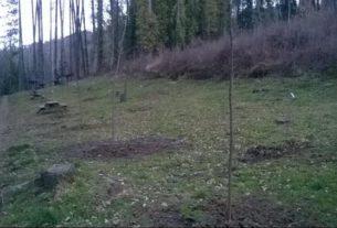 Cento alberi per il parco del Canto alla Rana