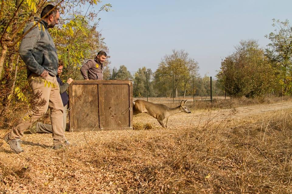 centro recupero animali selvatici bernezzo 1521623186