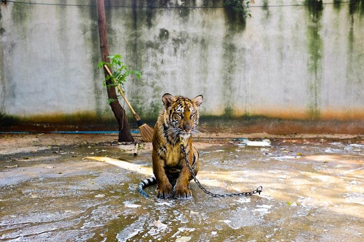 cuneo no sfruttamento animali nel circo 1551778322