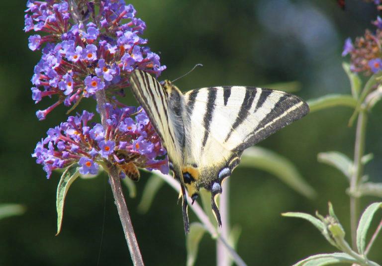 farfalle tornano volare quando rinascita passa ex miniera 1561365665