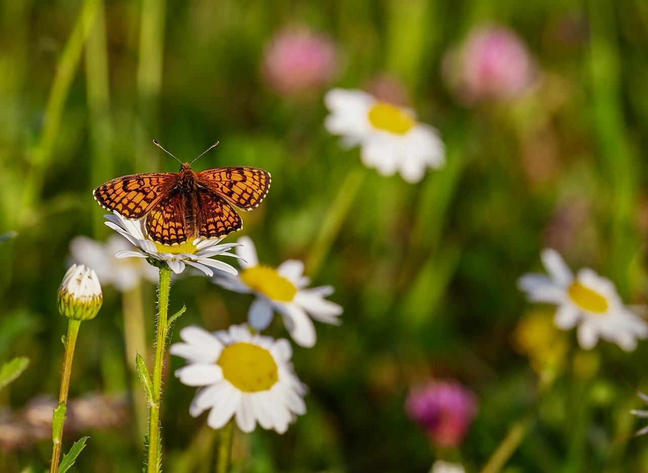 farfalle tornano volare quando rinascita passa ex miniera 1561365859